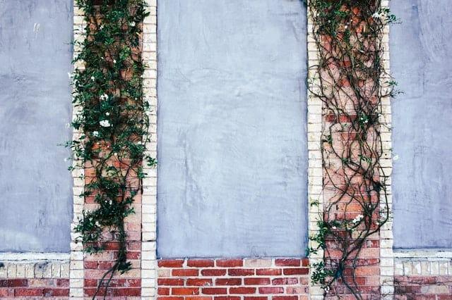 vines and boundaries